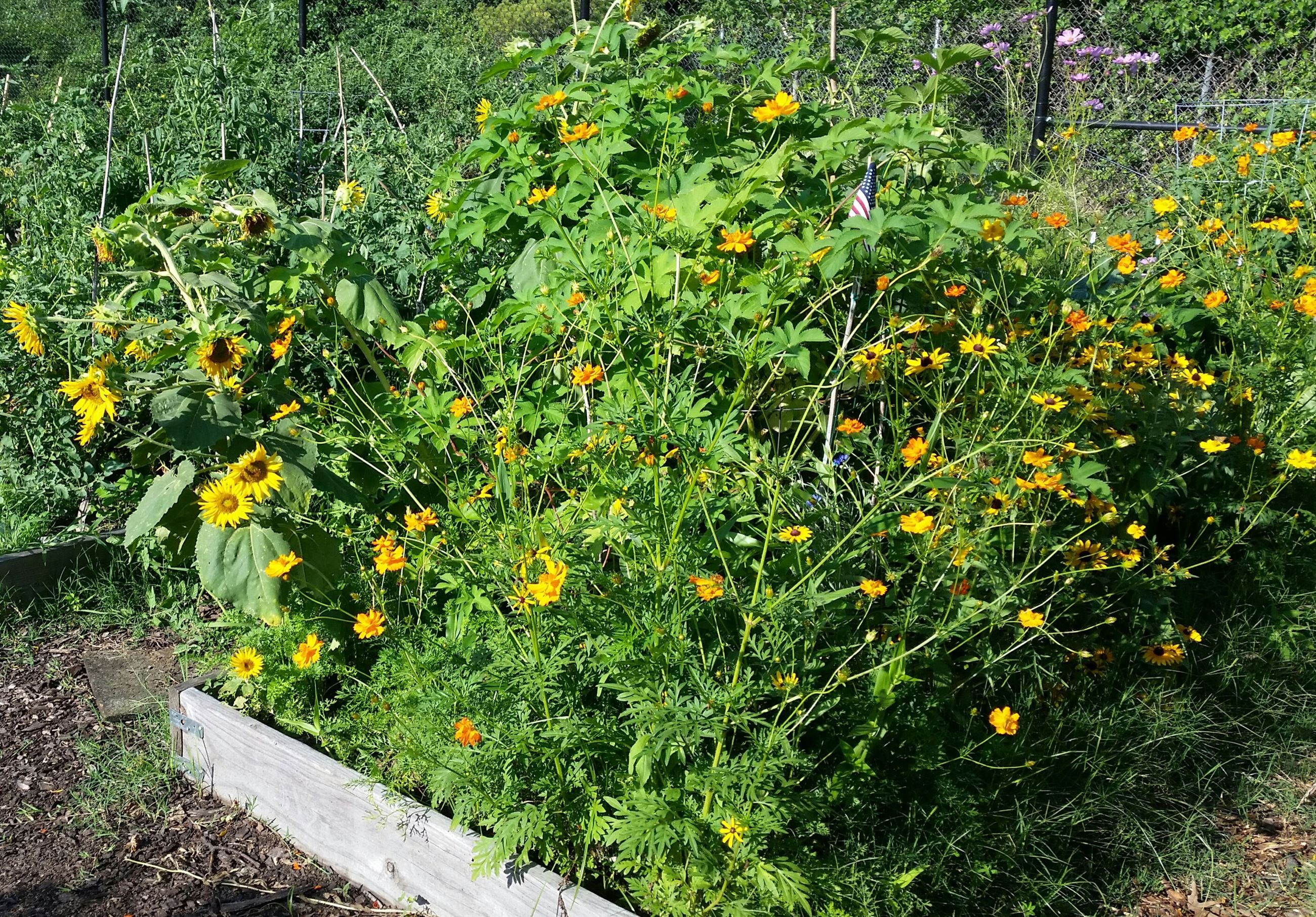 Community Garden Plots - flowers