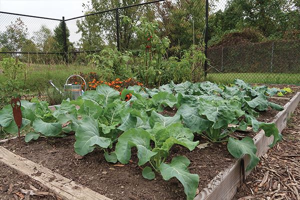 communitygarden3